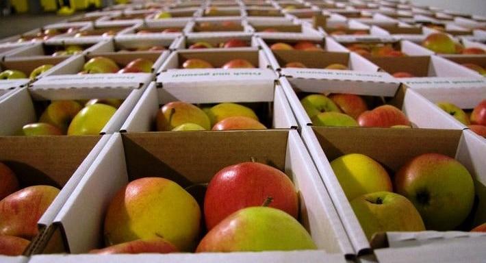 Apfelkuchen backen mit dem besten Apfelkuchen-Rezept
